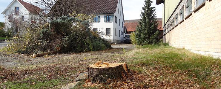 Abgesägter Baum Nusser-Hof