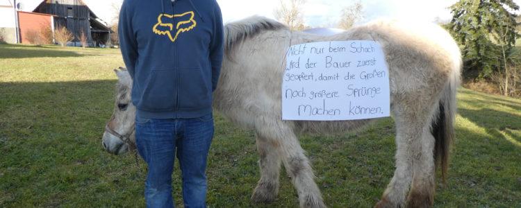 Fox Pferd